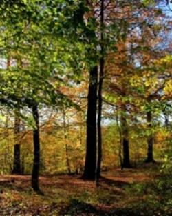 Découverte de la forêt en automne, fruits et baies sauvages