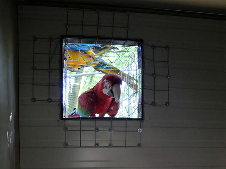 PAD_actu_perroquets_hiver_trappe_curieux.jpg