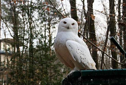 PAD_accueil_mosaique_oiseaux_hibou_harfang_voliere.jpg