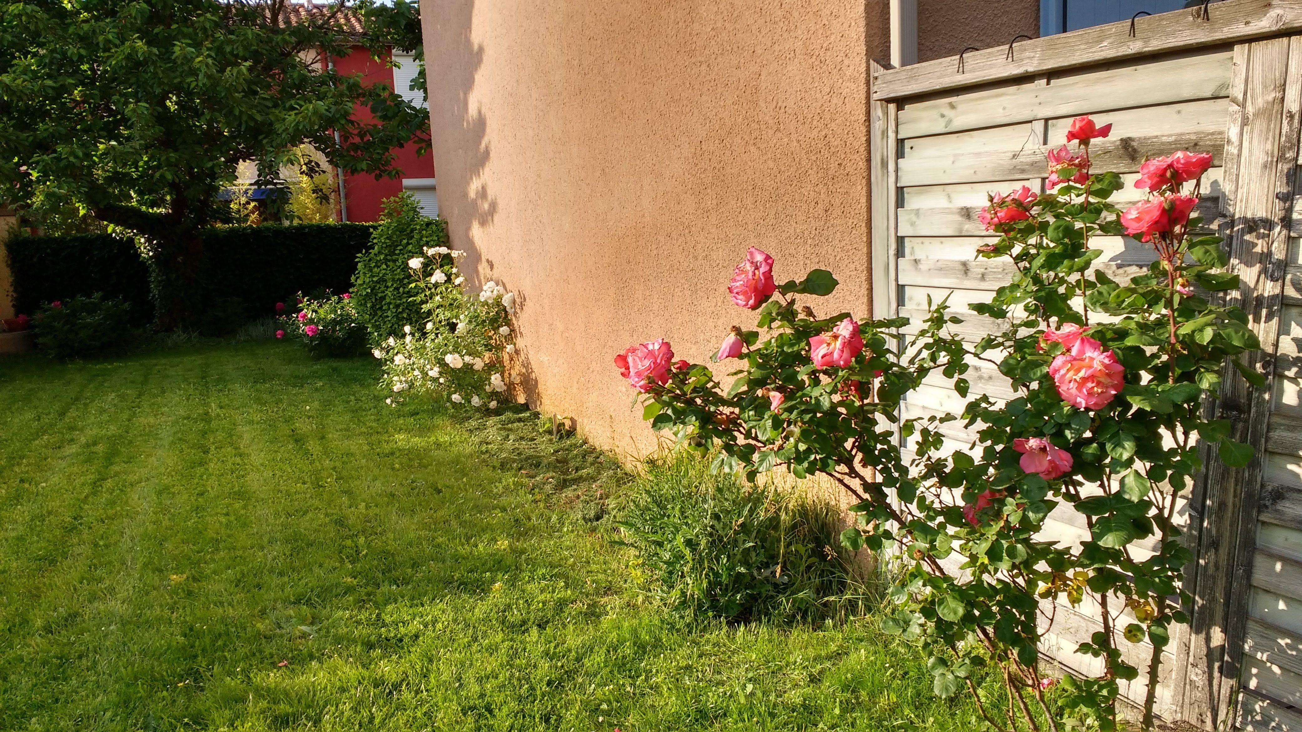 Chambre-à-louer-Blagnac-Andrew31