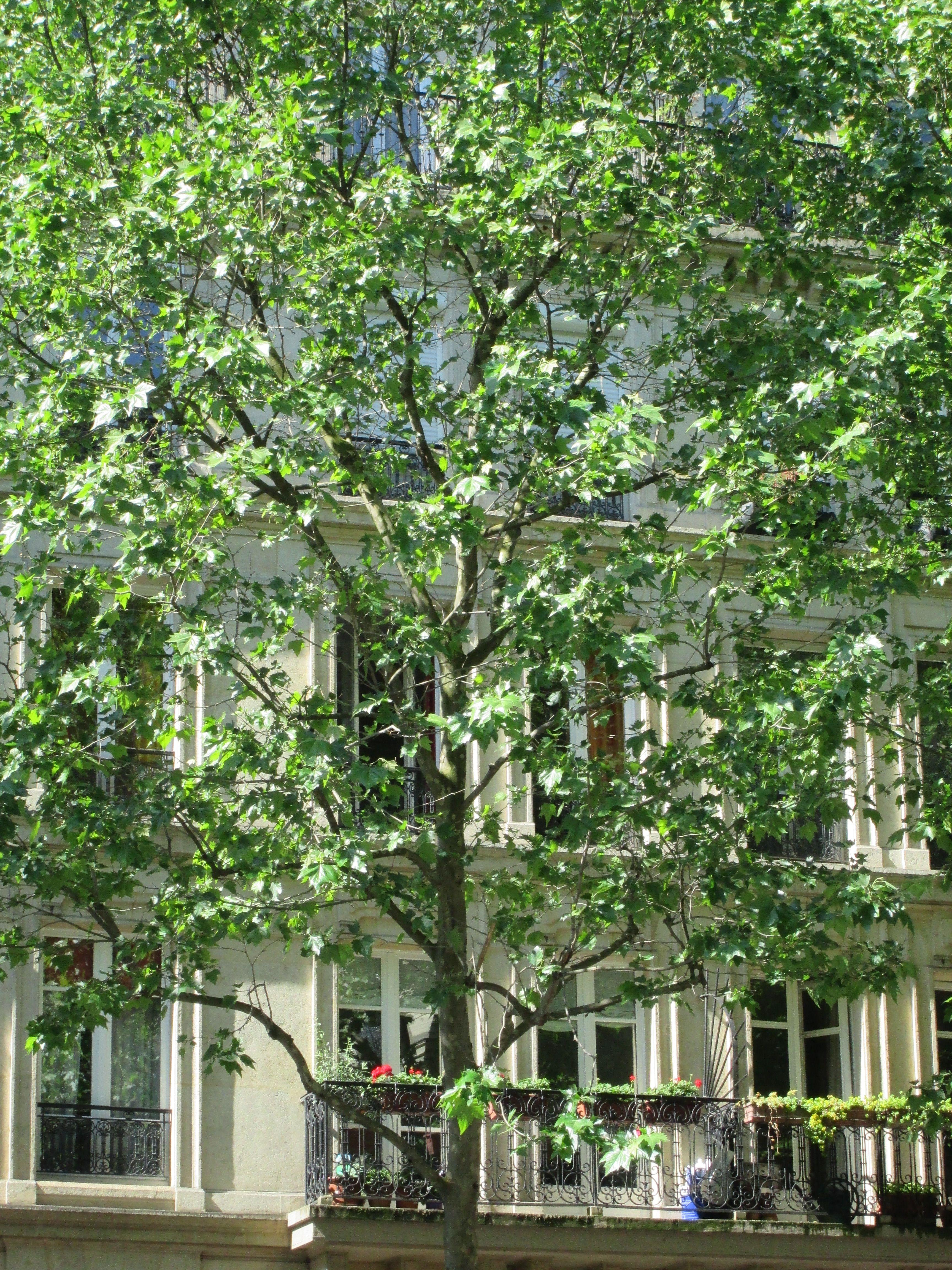 Chambre-à-louer-Paris 10ème arrondissement-XLBPARIS