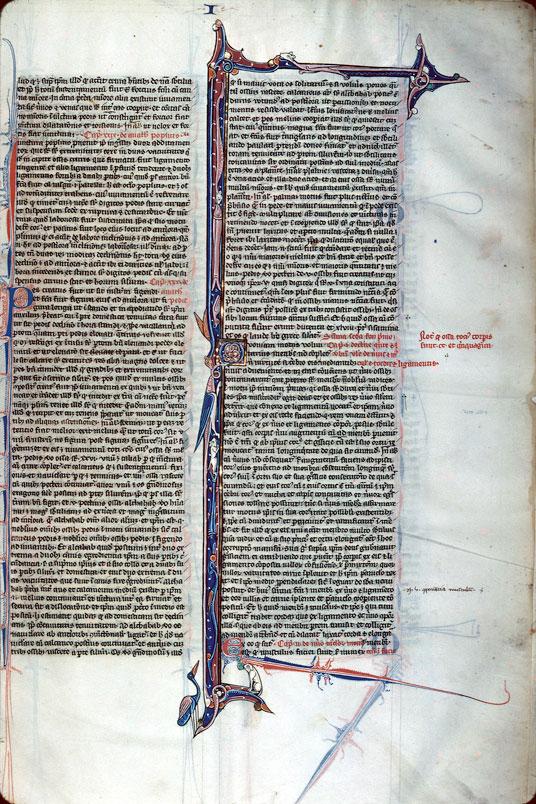 Canon medicinae - Initiales ornées et filigranées_0