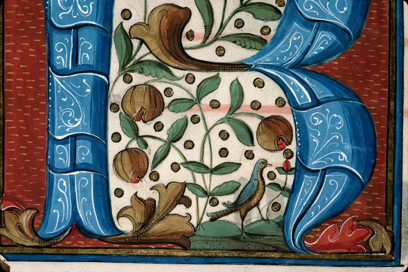 Graduel - Fleurs et fruits/Oiseau_0