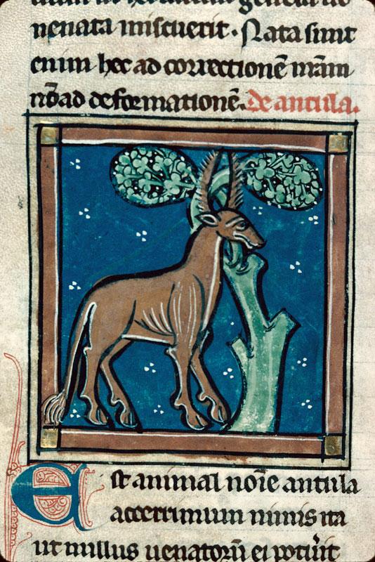 Bestiaire - Antilope prenant ses cornes dans les branches d'un arbre_0