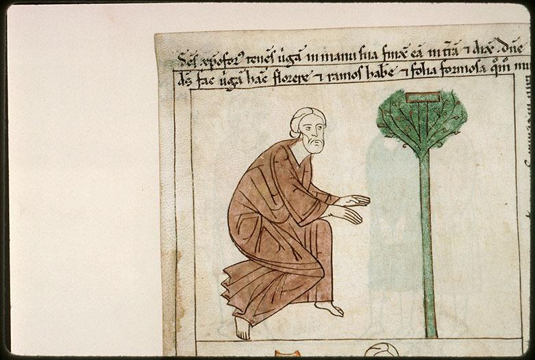 Bible en images - Saint Christophe et son bâton de passeur changé en palmier_0