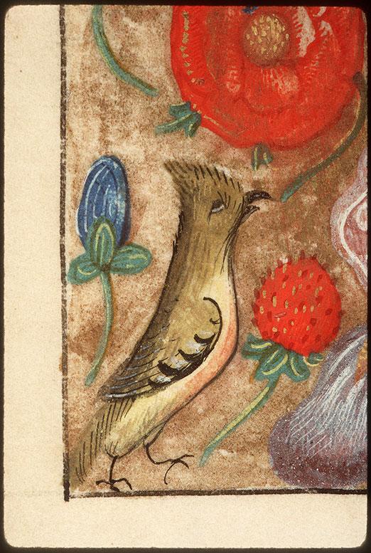 Heures à l'usage de Rome - Fleurs/Paon/Oiseau/Hybride zoomorphe_0