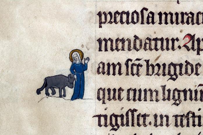 Martyrologe-obituaire de l'abbaye Notre-Dame des Prés de Douai - Sainte Brigide et sa vache_0