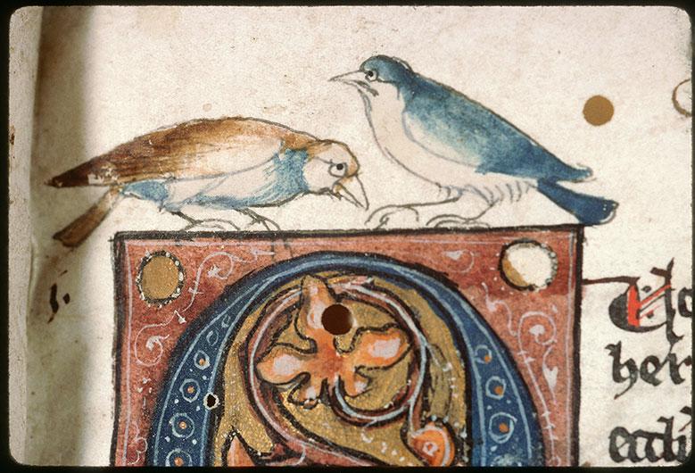 Summa de casibus - Oiseaux et hybride zoomorphe_0