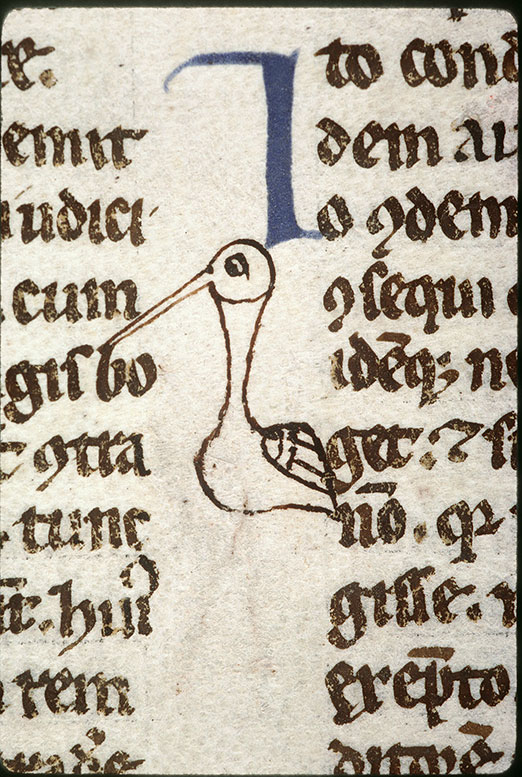 Digestum vetus - Oiseau_0