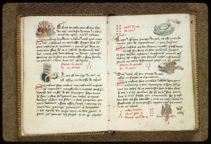 Introduction à l'astrologie - Constellation : le Vautour tombant_0