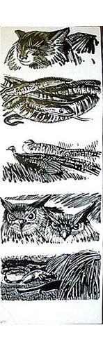 Panthères, hiboux et chats [titre attribué]_0
