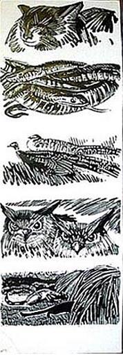 Chats, serpents et autres animaux [titre attribué]_0