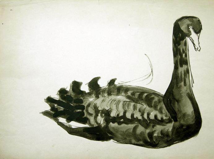Un cygne noir sur l'eau (étude) [titre attribué]_0