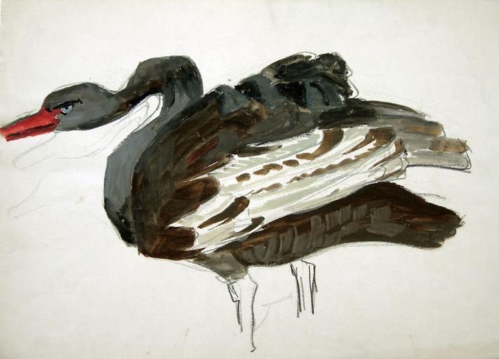 La colère du cygne noir (étude) [titre attribué]_0