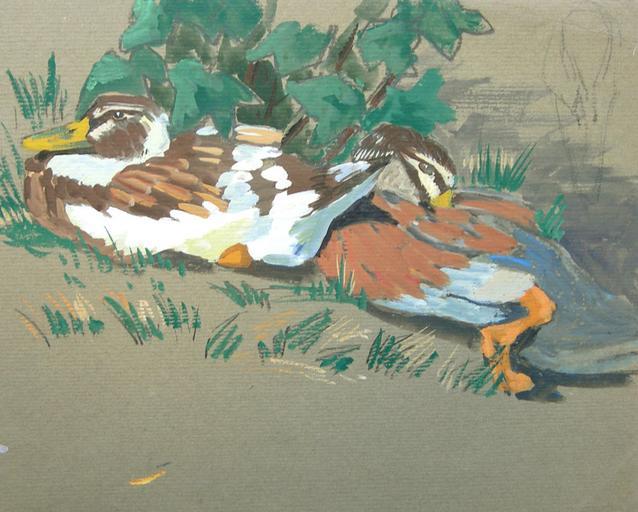 Deux canards bruns (étude) [titre attribué]_0
