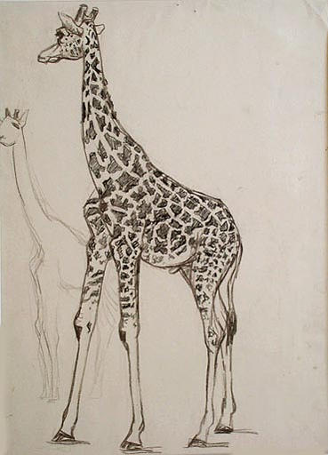 Girafe noire tachetée (étude) [titre attribué]_0