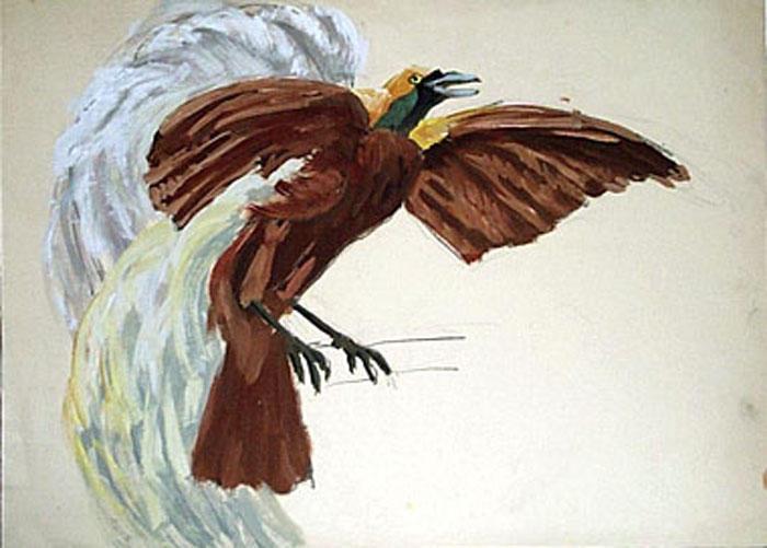 Un paradisier, ailes déployées (étude) [titre attribué]_0