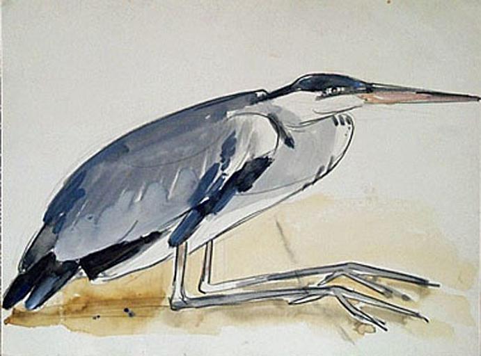 Héron gris accroupi (étude) [titre attribué]_0