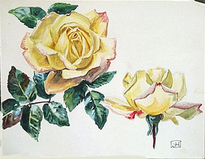 Deux roses épanouies [titre attribué]_0