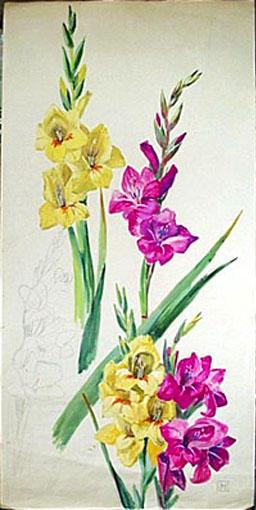 Glaïeuls roses et jaunes (étude) [titre attribué]_0
