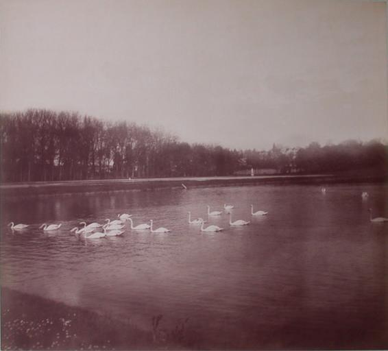 Les cygnes de Chantilly