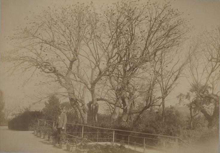 Les Coralgui (?) de la villa d'Orléans. Palerme. 4 avril 1885. 238_0