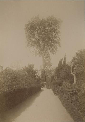 Jardin de la villa d'Orléans. Palerme. 4 avril 1885. 223_0