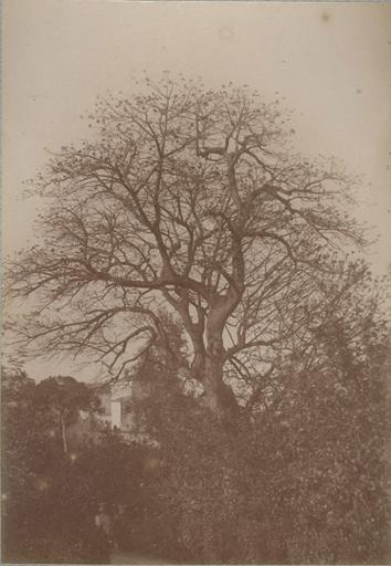 Villa d'Orléans. Palerme. 6 avril 1885