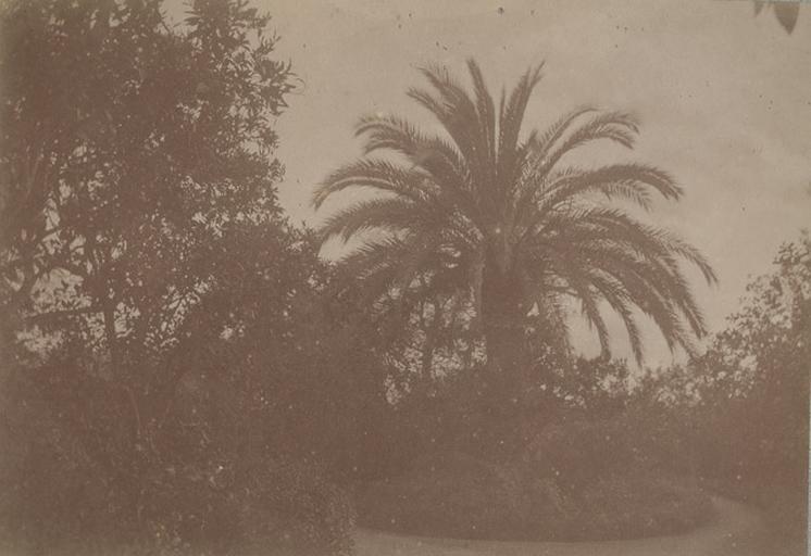 Villa d'Orléans. Palerme. 6 avril 1885. 284_0