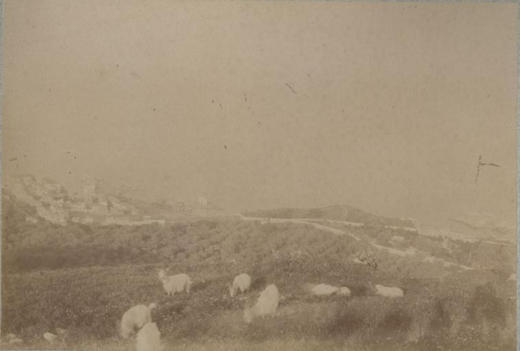 De Solunto (Sicile) 15 avril 1885_0