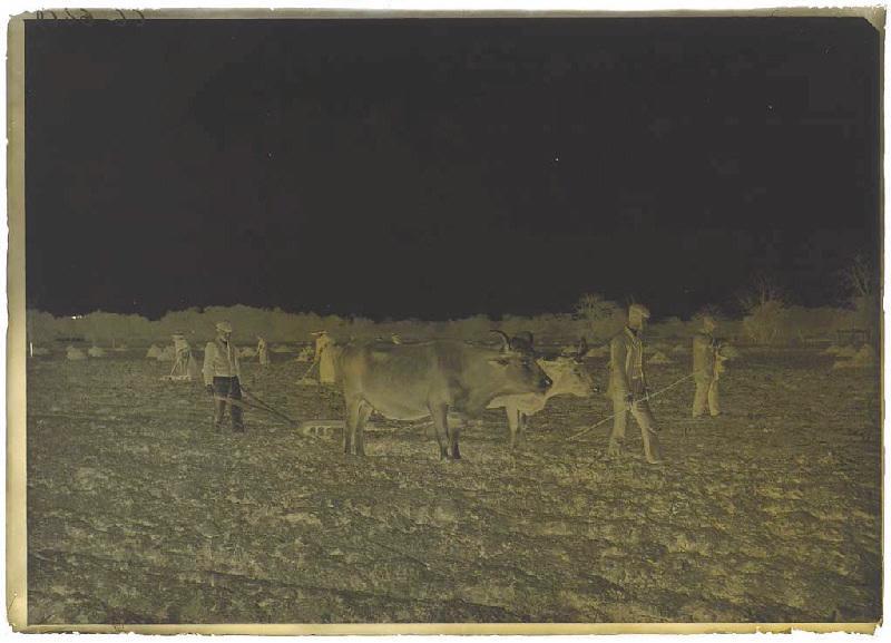 ARNAUDIN Félix (photographe) : Labours et semailles au champ du Teyqué à Sabres