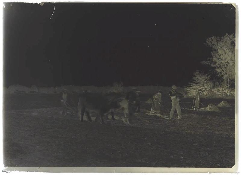 ARNAUDIN Félix (photographe) : Labours et semailles à Brin (Sabres).