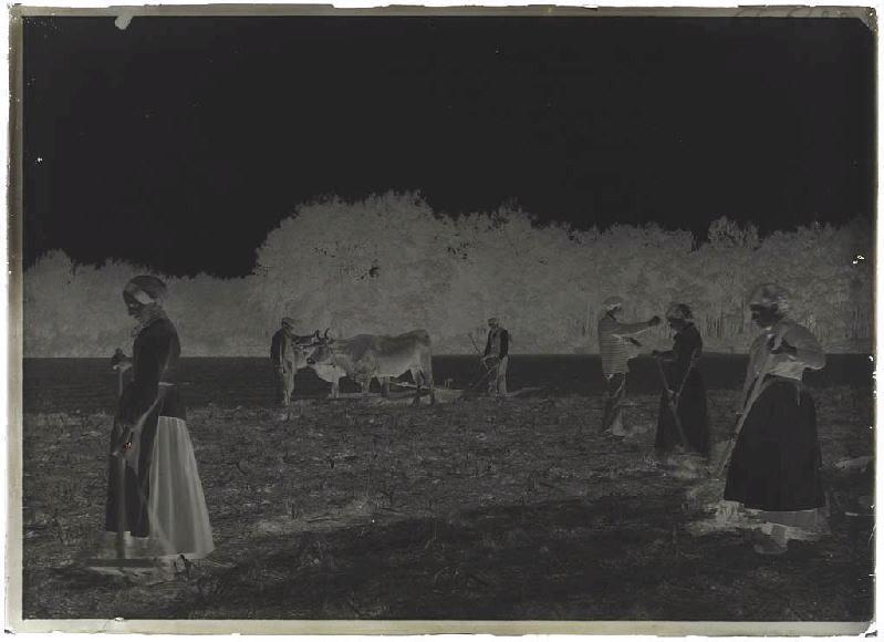 Labours et semailles avec Marie, Le Monge, Labouheyre_0
