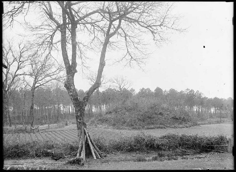 ARNAUDIN Félix : La motte du 'Castet' - Garosse (Landes) (Titre attribué)