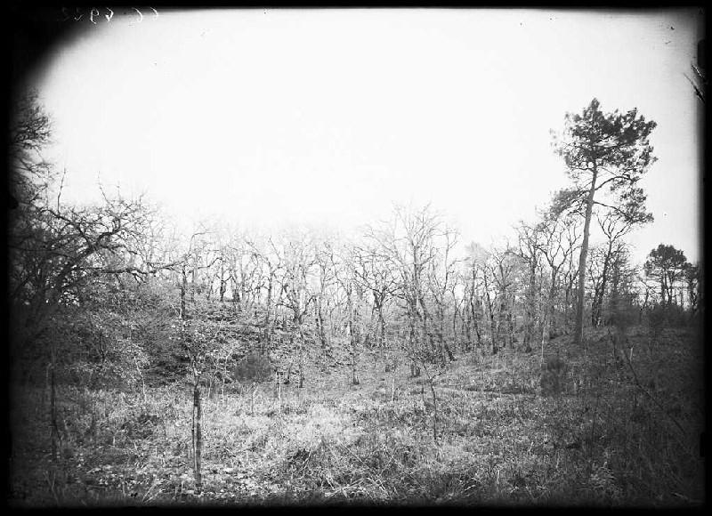 Motte du château - Laharie (Landes) (Titre attribué)_0