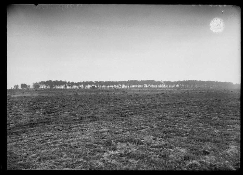 ARNAUDIN Félix : La Bruze - Commensacq (Landes) (Titre attribué)