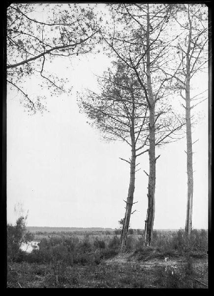 La Bruze - Commensacq (Landes) (Titre attribué)_0