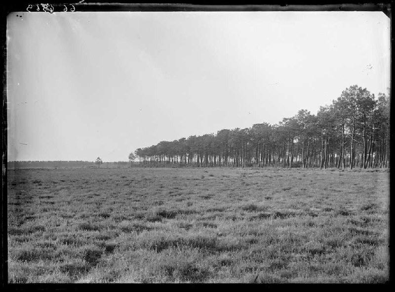 Pins du Barrac - Capbat (Commensacq) (Titre attribué)_0