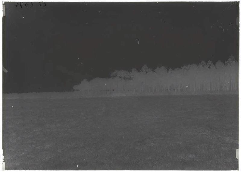 ARNAUDIN Félix : arbres de Chioule - Bruze (Commensacq) (Titre attribué)