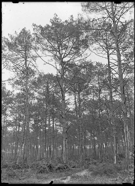 ARNAUDIN Félix : chemin du Parc - Bruze (Commensacq) (Titre attribué)