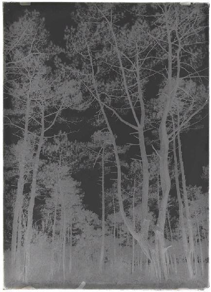 ARNAUDIN Félix : Deux vieux pins - Pichourrents (Commensacq) (Titre attribué)