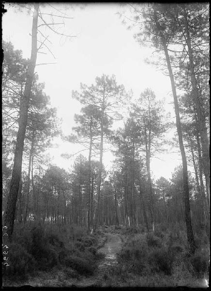 ARNAUDIN Félix : chemin vert du Bouchon - Le Bouchon (Labouheyre) (Titre attribué)