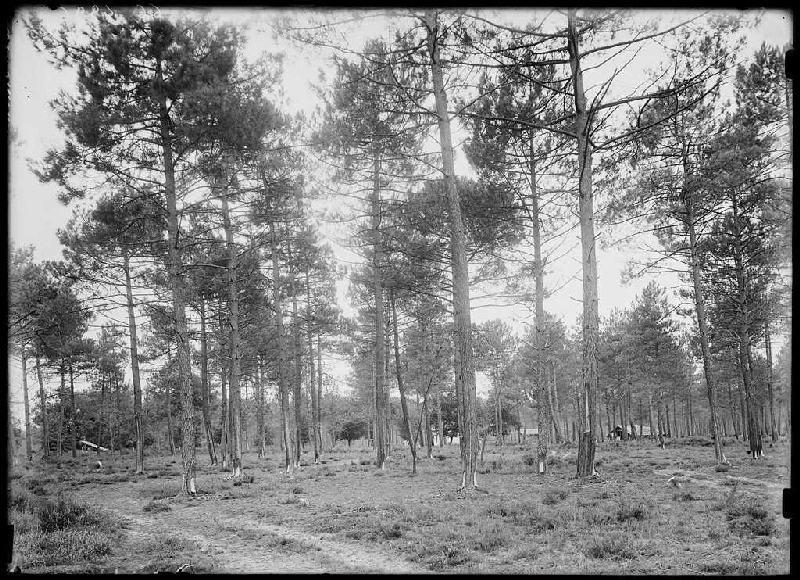 chemin vert du Bouchon - Le Bouchon (Labouheyre) (Titre attribué)