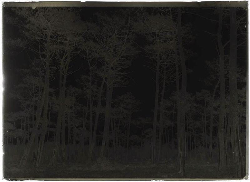 ARNAUDIN Félix : Grands pins doubles - Lilère (Lüe) (Titre attribué)