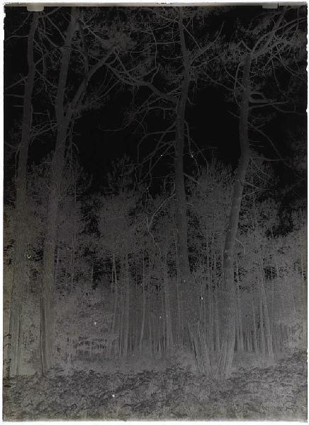 Grands pins doubles - Lilère (Lüe) (Titre attribué)