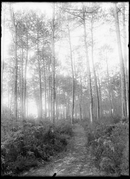 ARNAUDIN Félix : Ancien chemin de Labouheyre à Lüe (Titre attribué)