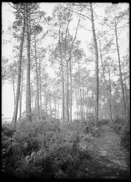 Ancien chemin de Labouheyre à Lüe (Titre attribué)