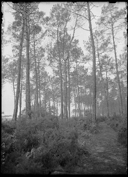 Ancien chemin de Labouheyre à Lüe (Titre attribué)_0