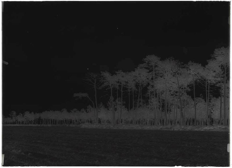 ARNAUDIN Félix : Grands vieux pins - Baxentes (Lüe) (Titre attribué)