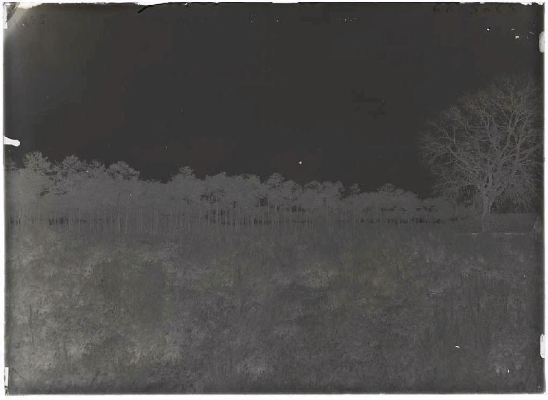 ARNAUDIN Félix : Grands pins - Peyricat (Sabres) (Titre attribué)